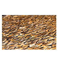 Quail Feathers